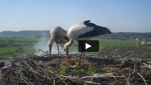 Widok z Kamery na gniazdo bociana białego w Gniewie