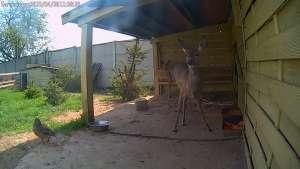 Zdjęcie z kamery CAM3 - Klekusiowo: Paśnik - sarny