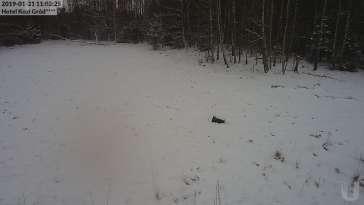 Zdjęcie z kamery Paśnik na żywo