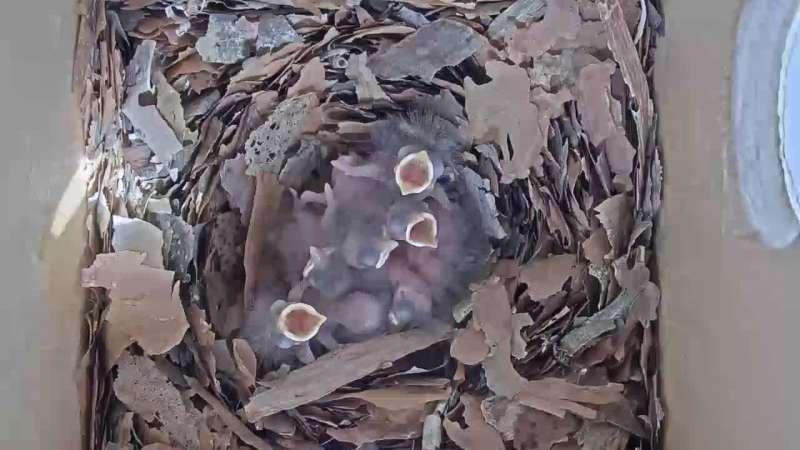 Zdjęcie z kamery Gniazdo sikory bogatki