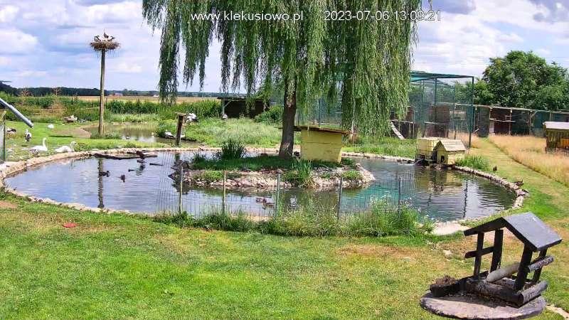 Obraz z kamery na oczko wodne w Ośrodku Rehabilitacji Dzikich Zwierząt Klekusiowo