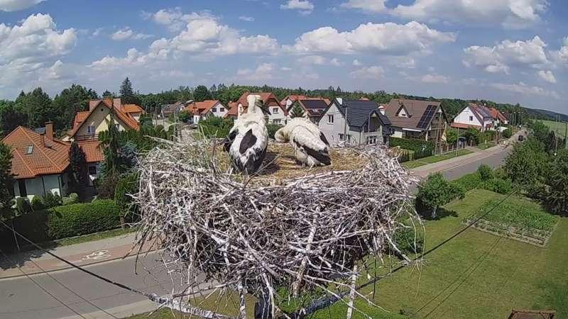 Zdjęcie z kamery Pasłęk - gniazdo bociana