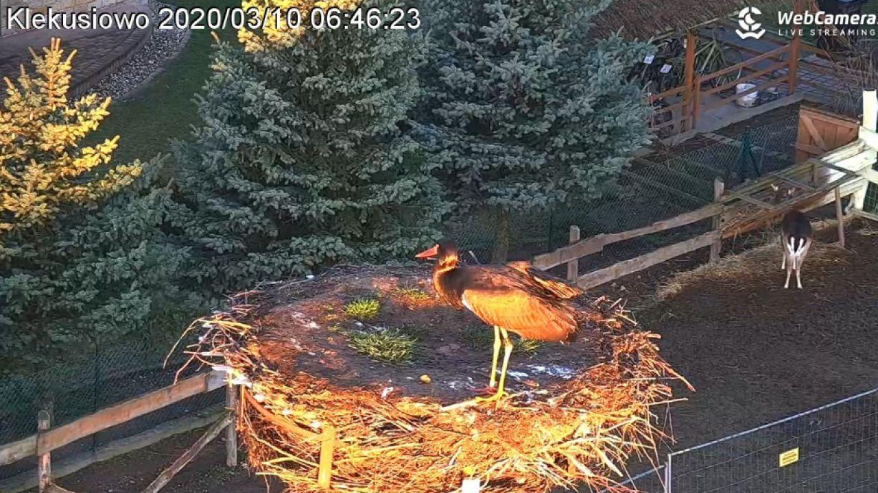 Zdjęcie do materiału video Film z odwiedzin Bociana Czarnego na WebCamera.pl