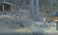 Kamera na paśnik i dzikie zwierzęta: jelenie, sarny, dziki.